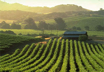 Private Aircraft Charter Services to Napa Valley California